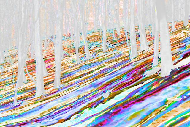 Baumschatten im Schnee, © Thomas Bischof