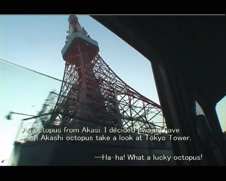 "Shimabuku ""Then, I decided to give a tour of Tokyo to the octopus from Akashi"", 2000 performance + video installation, mini DV transferred to DVD, 6.50 min. // Courtesy the artist"