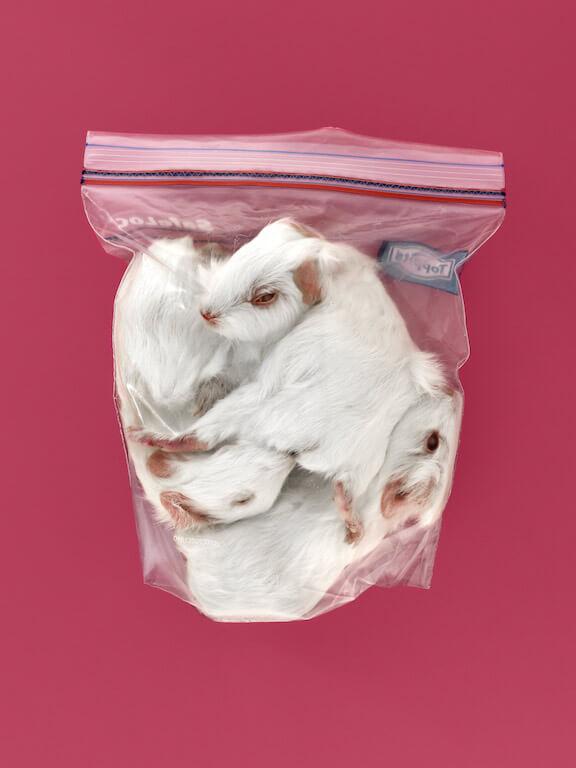 Bags, © Steve Braun