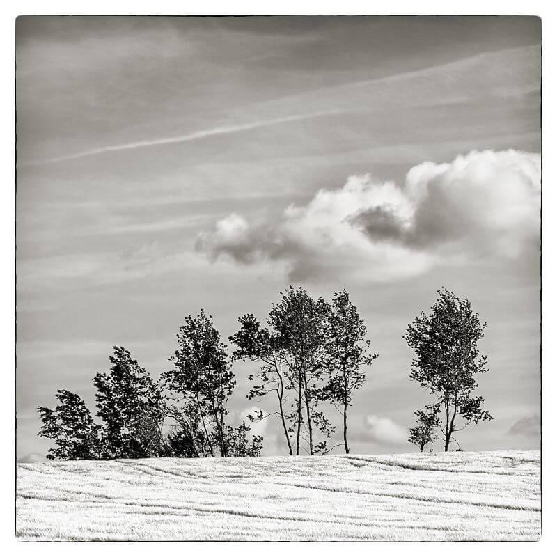 Im Wind, © Ralf Kunstmann