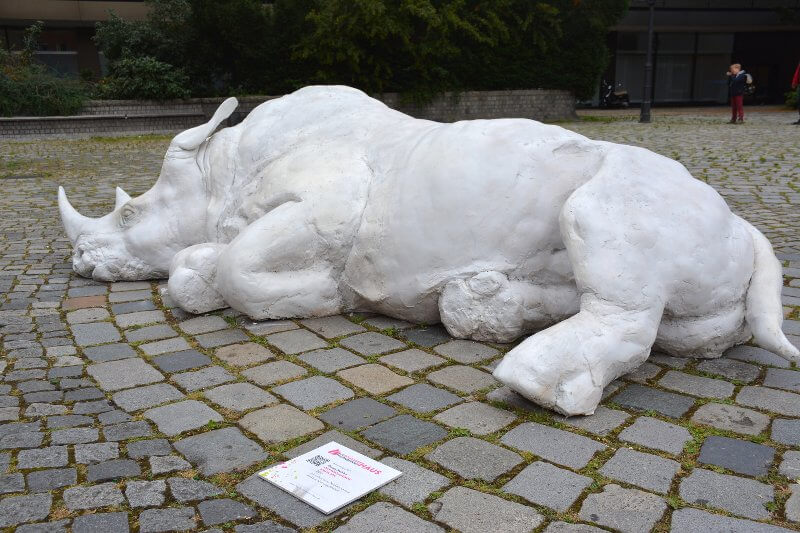 Dorota Hadrian: Nashorn, Foto: Krakauer Haus
