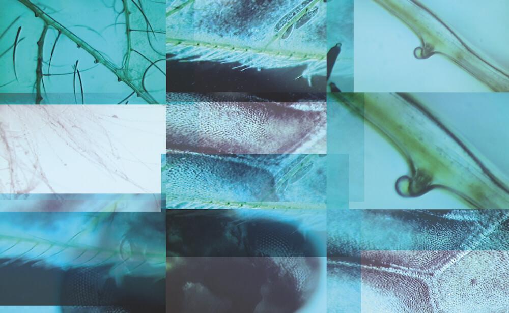 Mikroskopiecollage, 2015, Mikroskopie + Fotografie Collage, © Aniela Helen Guse