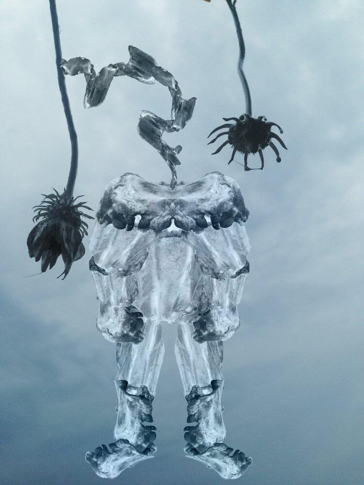 fleischblume, 2016, Fotografie Collage, © Aniela Helen Guse