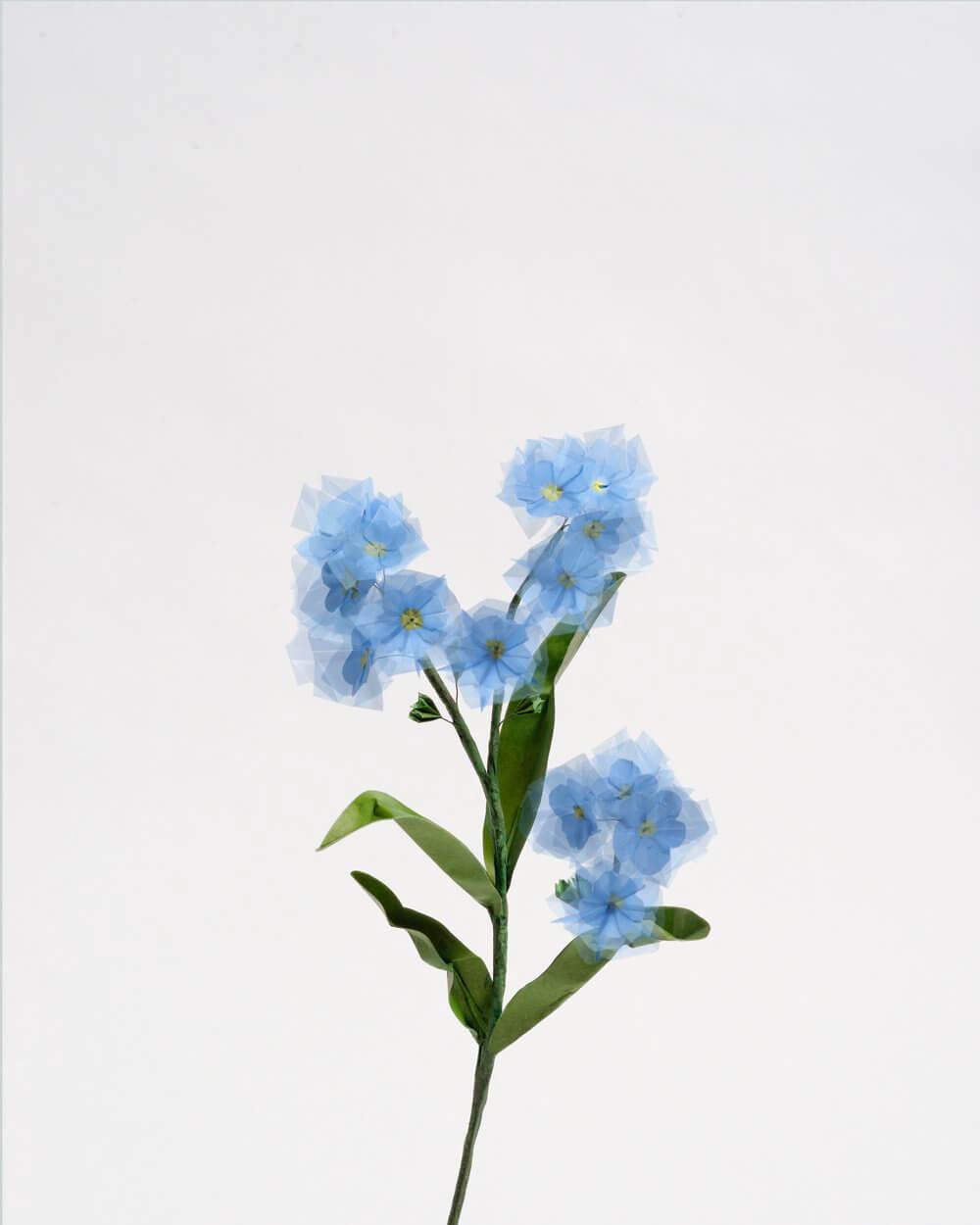 Gardening, 2015, 50 x 40 cm © Margarete Schrüfer