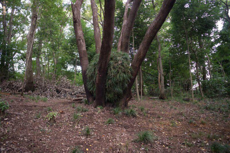 Thomas May: Cherry Tree Garden, 10 im Zeichen des Hahns, kunst galerie fürth
