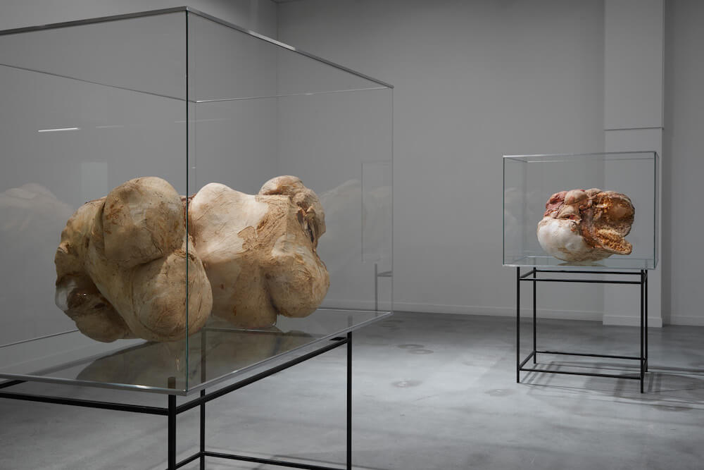 """Peter Buggenhout, """"Eskimo Blues II"""", 1999 / """"Opeten"""", 2000 Installationsansicht M Museum, Leuven (BE) · © Dirk Pauwels"""