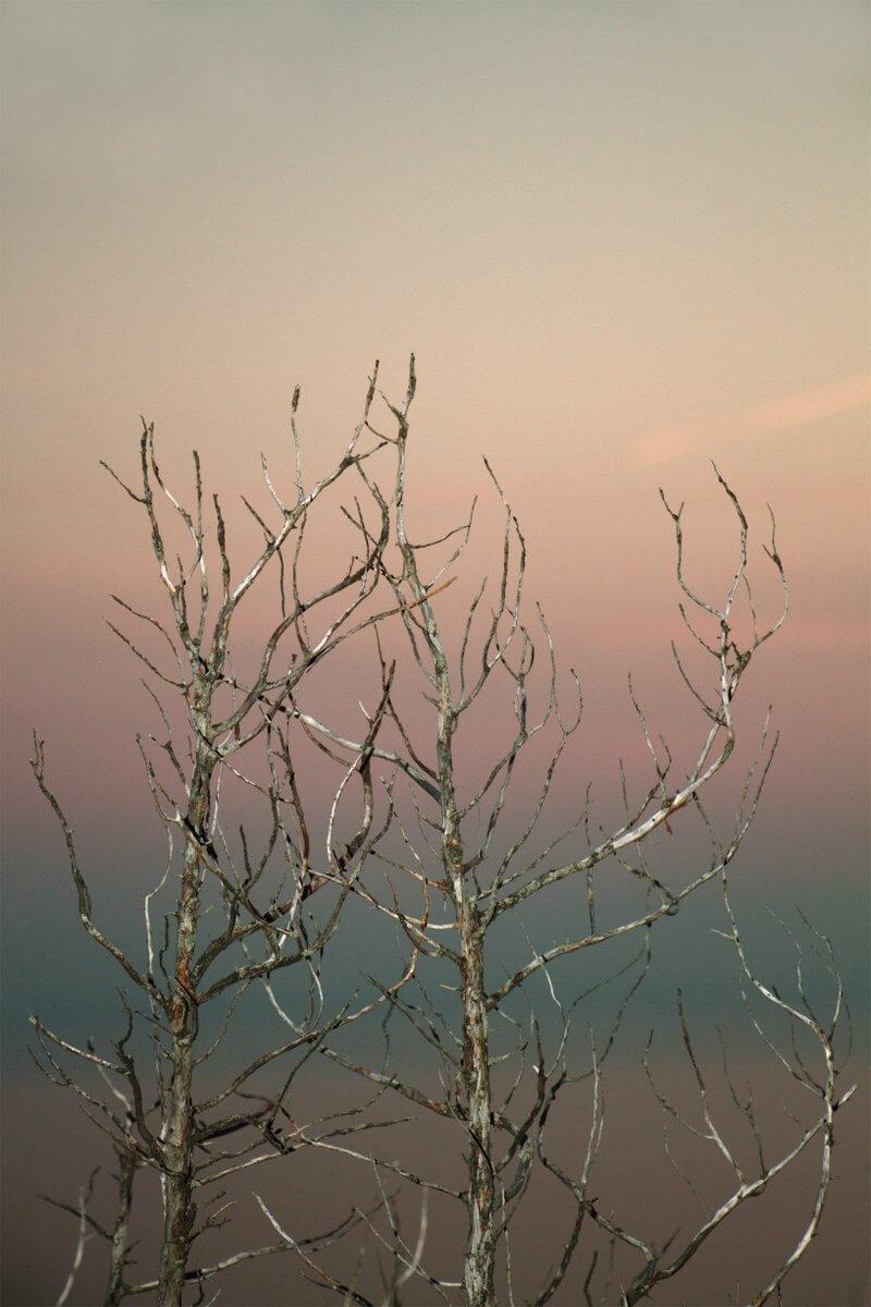 Paradise #4, 2017, Maße variabel, Digitalfotografie, © Meike Männel