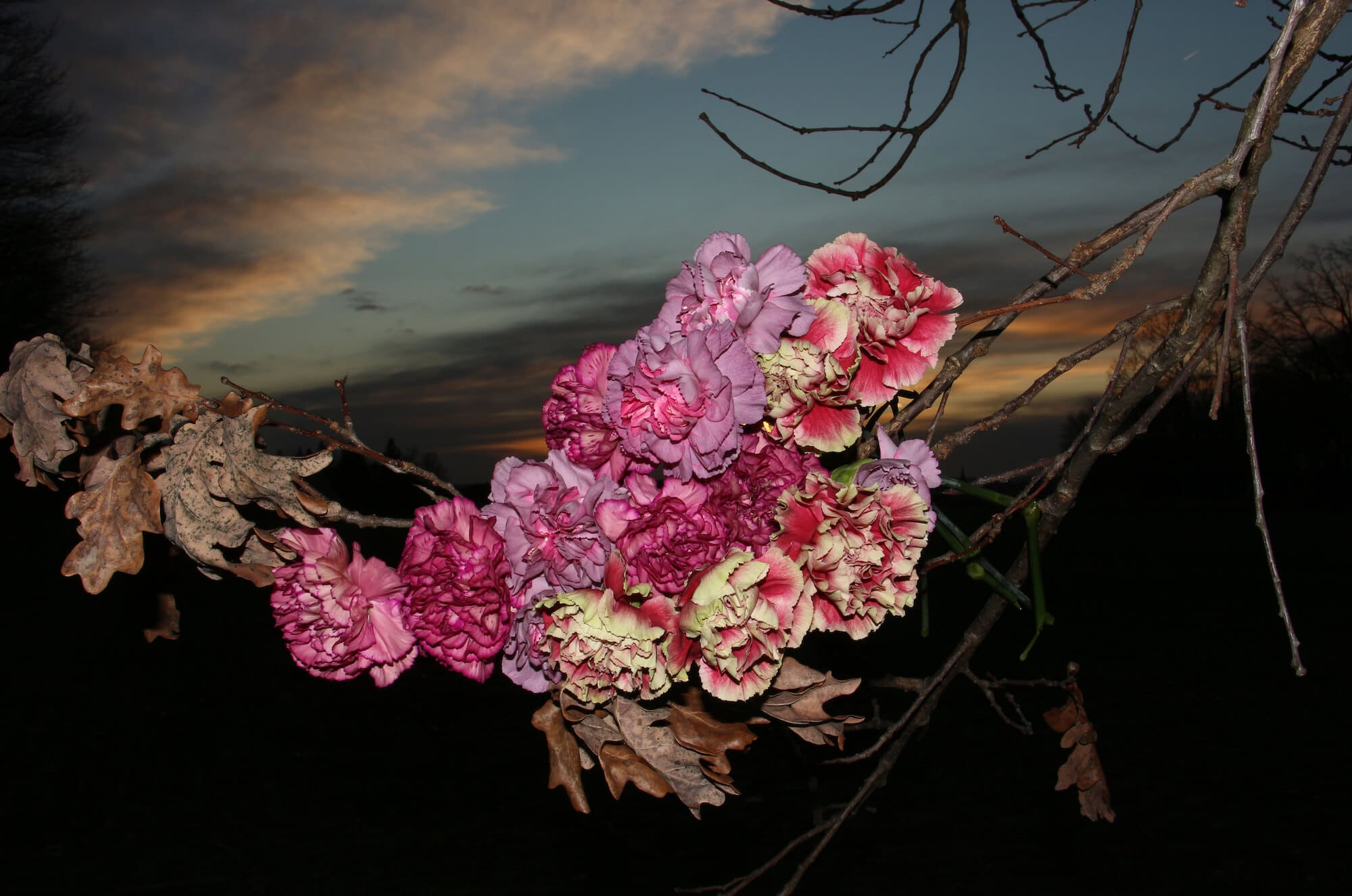Meike Männel Blumen I, 2018 Fotografie, 68 x 100 cm